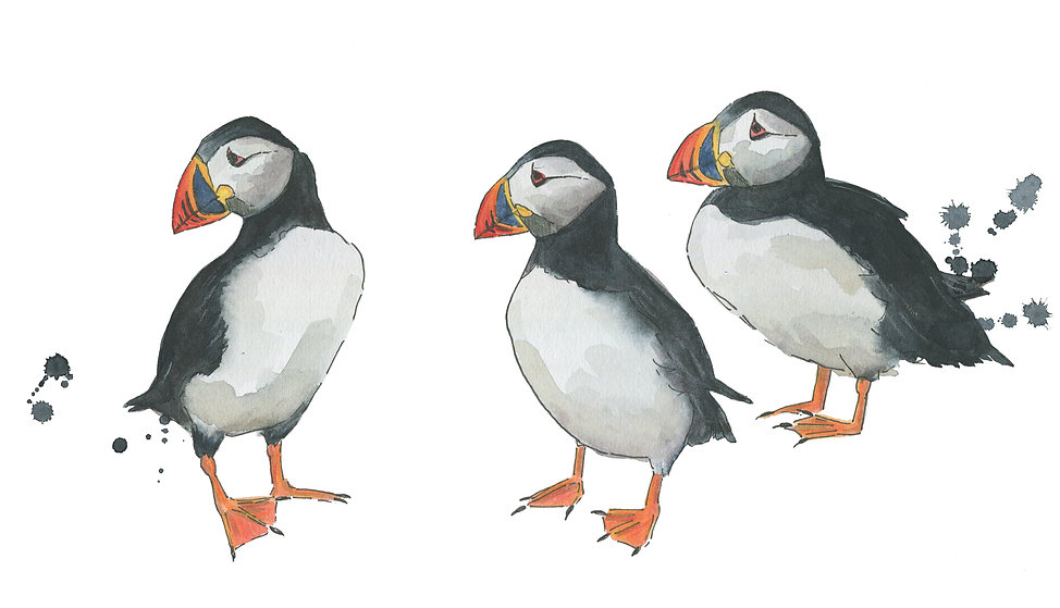 puffin-watercolour-illustration-sarah-do