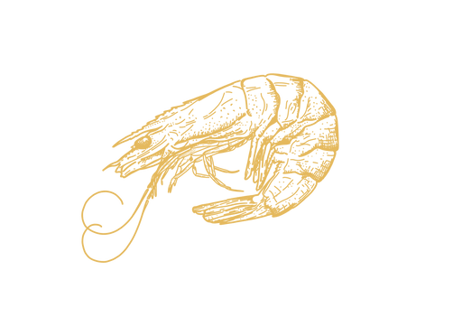 prawn-digital-line-drawing-sarah-dowling