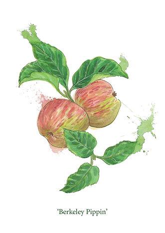 splashy-watercolour-apple-painting-sarah