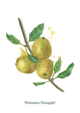 splashy-watercolour-dessert-apple-painti