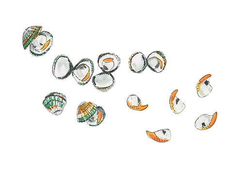 cockle-shells-gouache-painting-sarah-dowling-bristol-food-illustrator.png