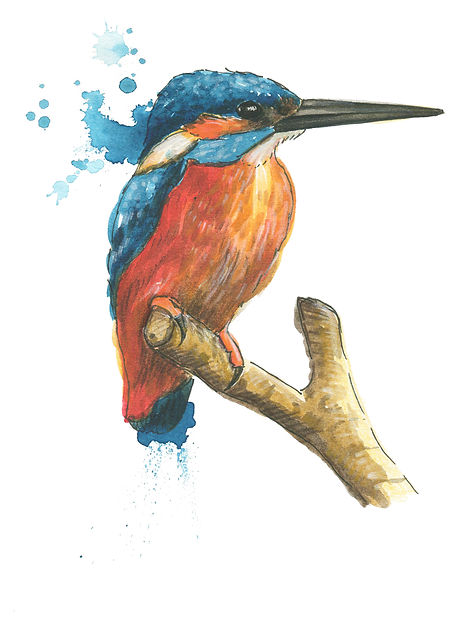 _ kingfisher-watercolour-illustration-sa