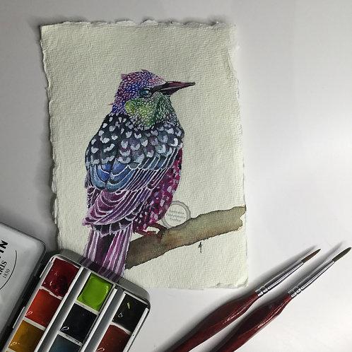 Ptaszek I