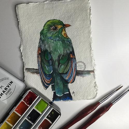 Ptaszek XI