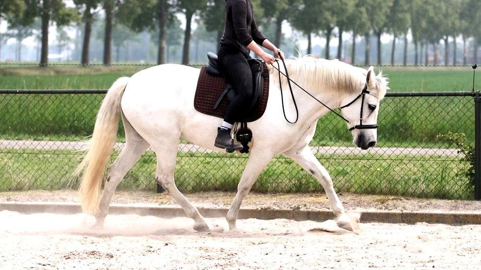 Ruiter rijdt dressuur op wit paard