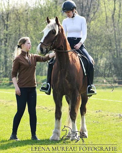 Scheef paard dressuur