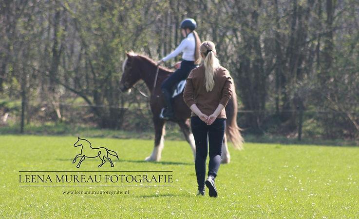Voorwaarts neerwaarts, revalidatie paard