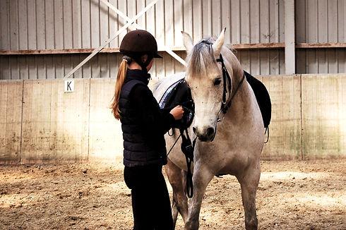 Werken aan de hand met arabische volbloed paard