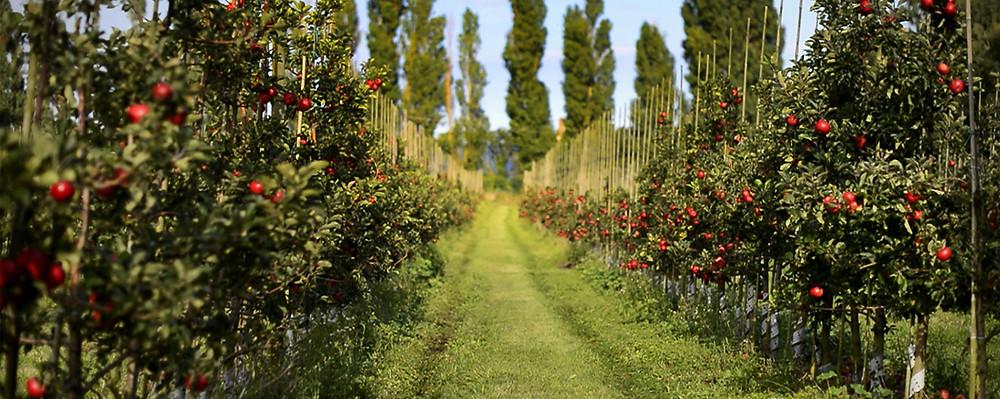 Kiviks äppelgård