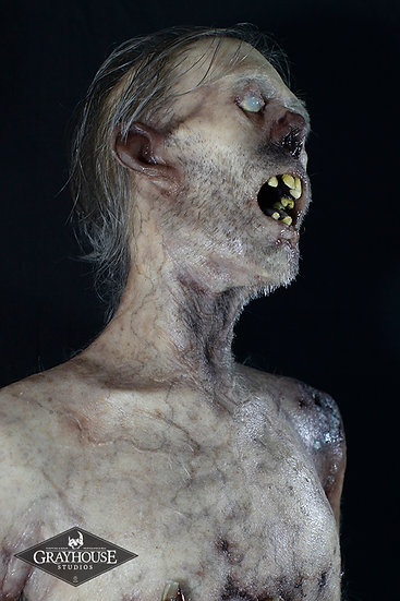 FULL SCALE DELUXE CADAVER DISPLAY