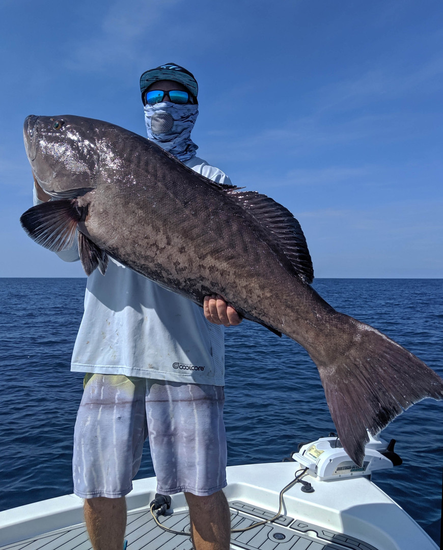 big grouper reduced.jpg