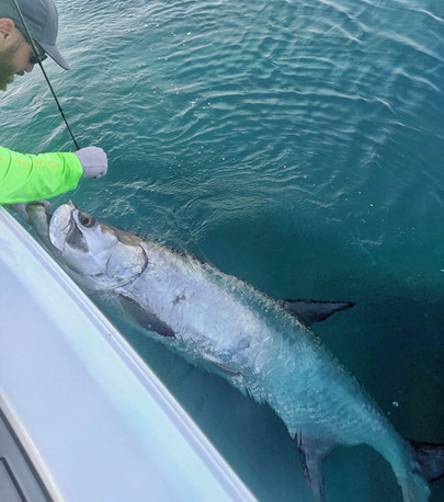 Sebastian inshore fishing guide for tarpon