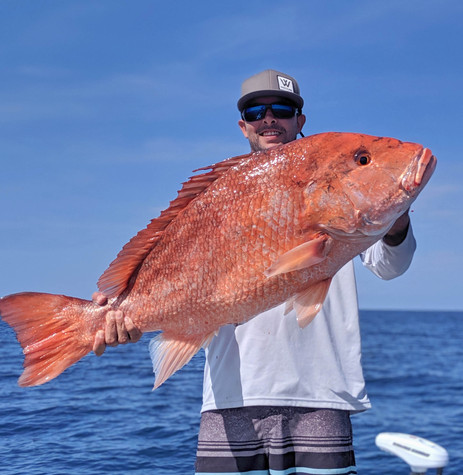 massive red snapper