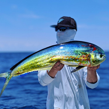 Offshore charter fishing for mahi