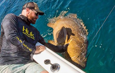 Goliath grouper caught fishing at Sebastian inlet