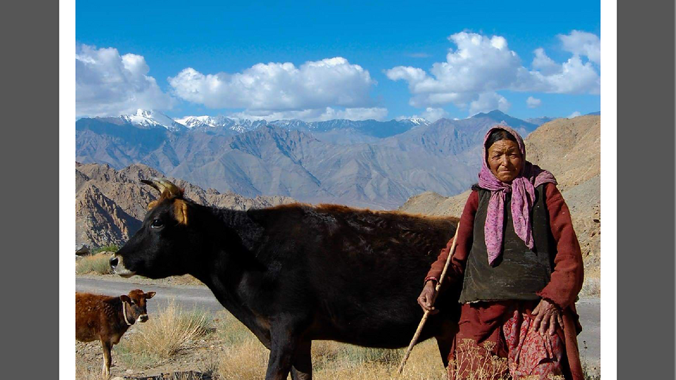 A woman and her cows - Ladakh, India