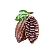 Cocoa  - ASAMI TEA SHOP