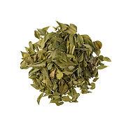 Buchu Plant  - ASAMI TEA SHOP