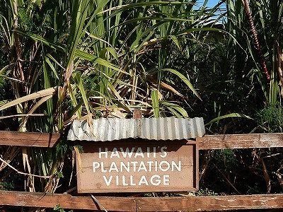 hawaiiplantationv.jpg
