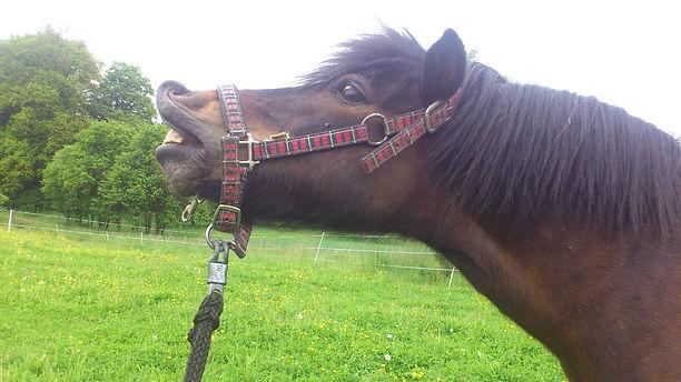 Barhuf Pferde sind glücklich