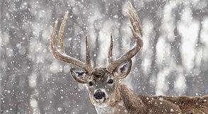 Deer Snow.jpg