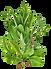 bouquet-garni.png