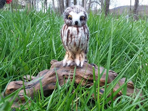Carey - Owl