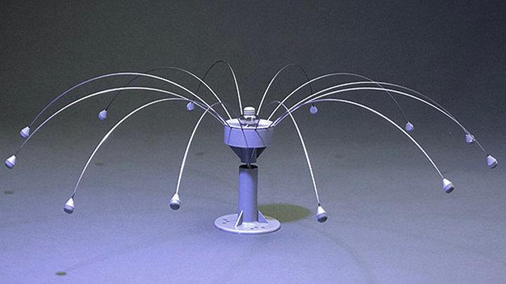 Bird Spider