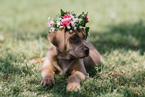 flower_crown_babiesbreath_local_winsted_