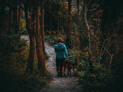 Forest Bathing the Self