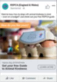 RSPCA_Social_posts_0001_Layer Comp 2.jpg