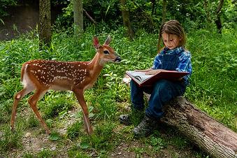 liam deer.jpg
