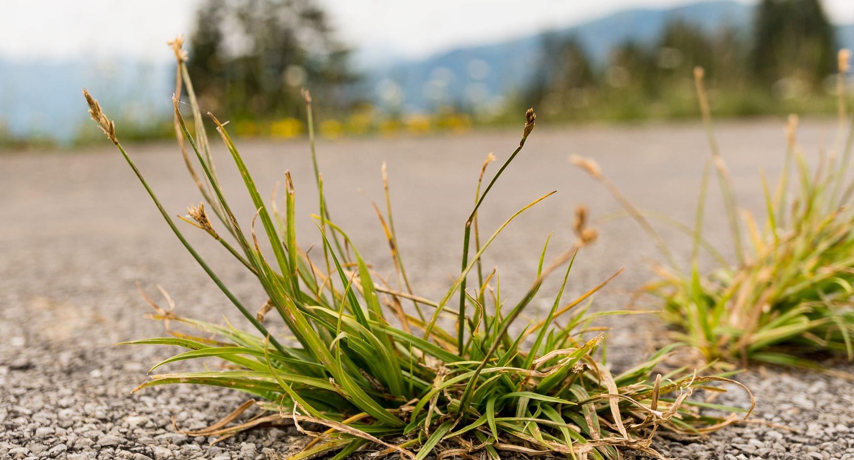 Sprössling_Gras2.jpg