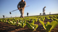 Ag crops.jpg