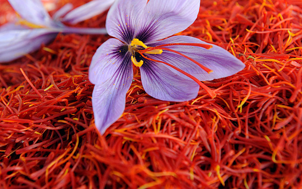 Image result for saffron