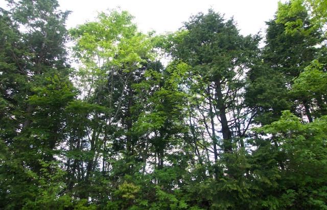 命が茂る・新緑にACPを重ねて