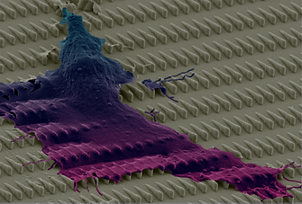 Cell Waterfall_new.png