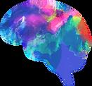 functional neurology brain center