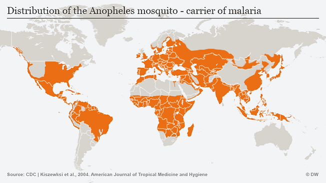 Global mosquito population.png