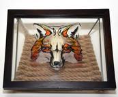 Gray Fox Skull Shadow Frame