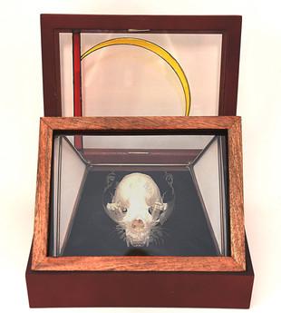 Otter Skull Shadow Frame