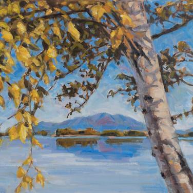 Mount Katahdin with Birch