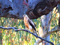 Birds of the Gunbower