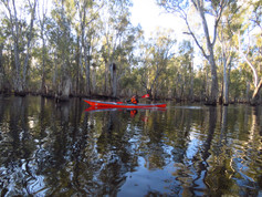 Flooded Gunbower Forest