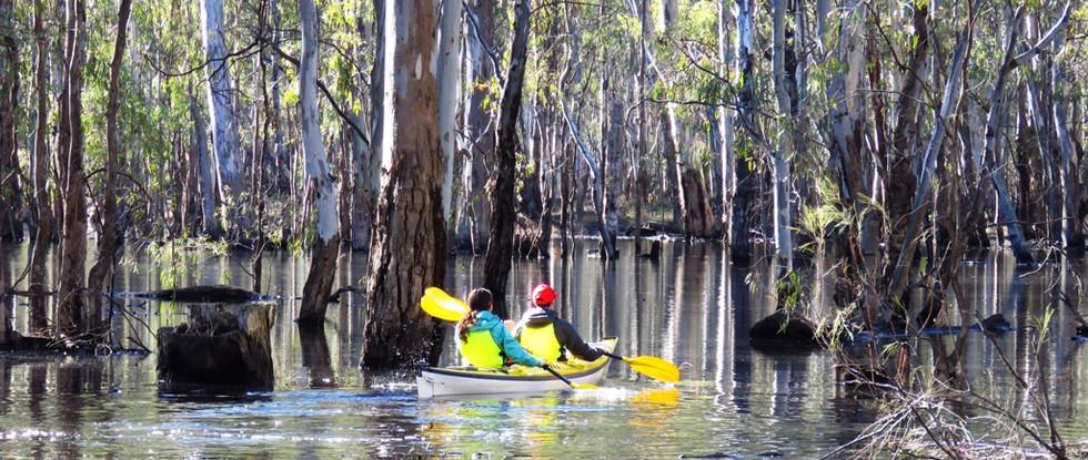 Gunbower Flooded Forest