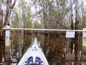 Flooded Gunbower Forest