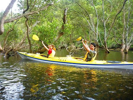 mangrove 3.JPG