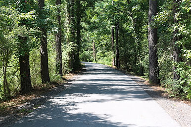much-of-the-tammany-trace-is-wooded-phot