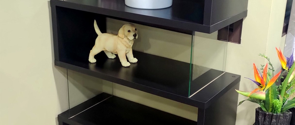 Attractive Display Case w/ Glass Panel Sides