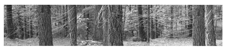 connecting trees.jpg